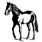 Hest- Wallsticker